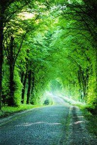 Gruppenavatar von Alleeeeee, Alleeeeee, Allee, Allee, Alleeeeee, eine Straße mit vielen Bäumen, ja das ist eine Alleeeeee