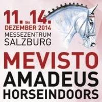 Amadeus Horse Indoors