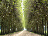 Gruppenavatar von Alleeeeee, Alleeeeee, Allee, Allee, Alleeee, eine Straße mit vielen Bäumen ja das ist eine Allee