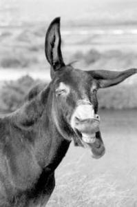 Gruppenavatar von Ich lache wenns NICHT sein darf und dann kann ich NICHT mehr aufhören!